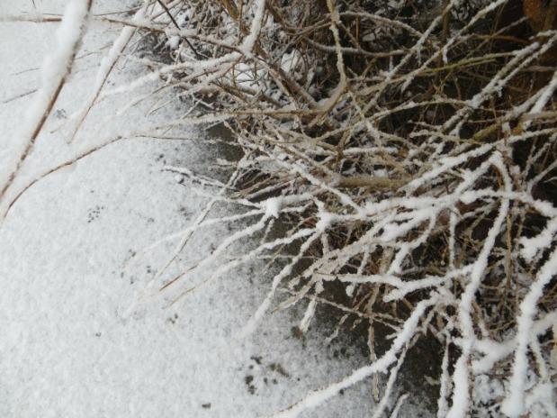 nieve-feb-2016